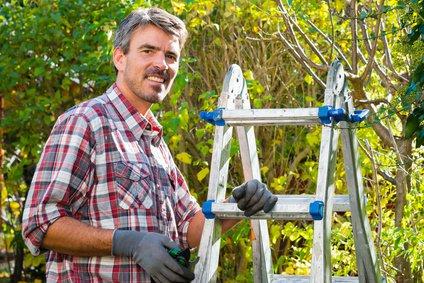 Le cerisier bigarreau burlat jardin relax - Comment faire fuir les oiseaux des cerisiers ...